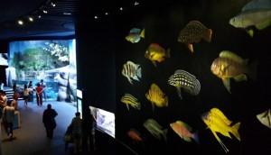 hewan sea aquarium 1
