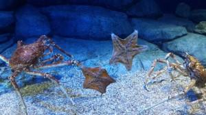hewan sea aquarium 2