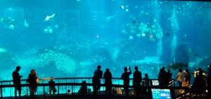 ikan sea aquarium 7