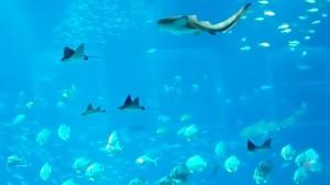 ikan sea aquarium 8