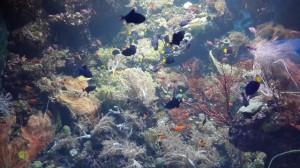 ikan sea aquarium singapore 11
