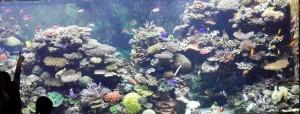 ikan sea aquarium singapore 12