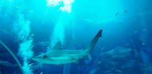 ikan sea aquarium singapore 13