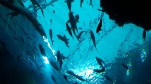 ikan sea aquarium singapore 2