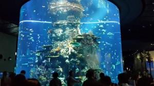 ikan sea aquarium singapore 3