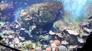ikan sea aquarium singapore 9
