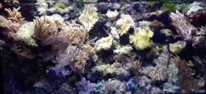 makhluk laut sea aquarium 1