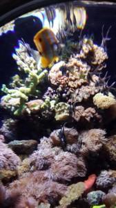 sea aquarium singapore 7
